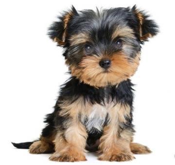 Annunci animali, canile, gattile e cuccioli a Como su Bakeca