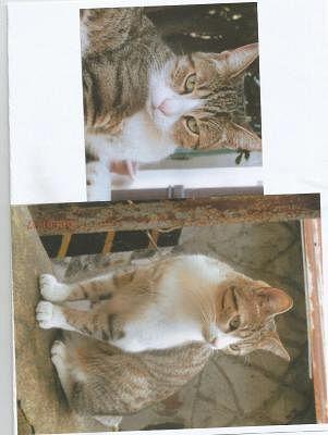Gatti Persi Trovati Da Adottare Annunci Animali