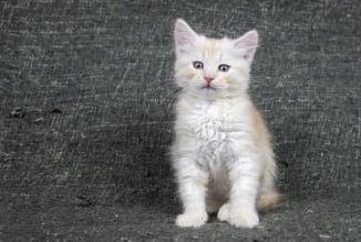 Cerco gattino in regalo torino Cerco camera da letto in ...
