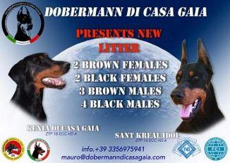 Dobermann Cani Lazio Annunci Animali Trovacucciolicom
