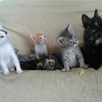 Gatto Di Casa Gatti Annunci Animali Trovacucciolicom Gratis