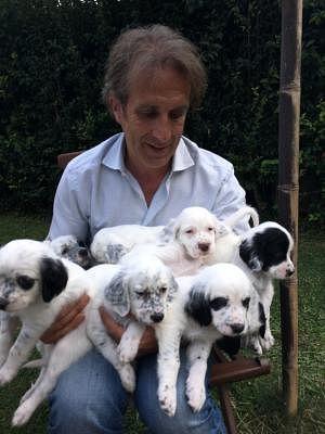 Setter Inglese Cani Annunci Animali Trovacucciolicom Gratis
