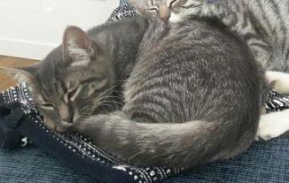 Gattini in regalo zona bergamo