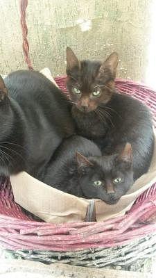 Europeo Gatti Annunci Animali Trovacucciolicom Gratis Cani