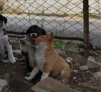 Persi Trovati Da Adottare Campania Annunci Animali